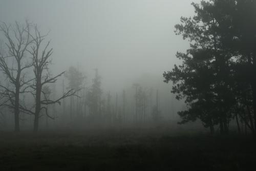 Poliana lechikh, clairière des esprits, lieux hantés, lieux maudits
