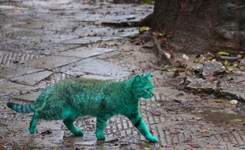 chat,chat vert,chat vert de bulgarie